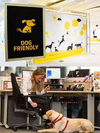 Dog friendly work place