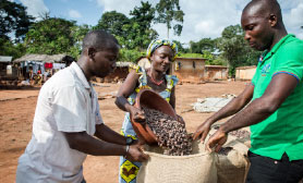 People working with cocoa beans