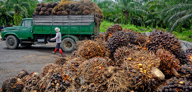 palm oil raw material
